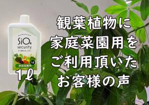 2.観葉植物と・Nice Mineral Liquid ケイ素セキュリティSiO4®